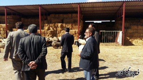 بازدید فرماندار کلاله از واحد تولیدی دریافت کننده تسهیلات روستایی