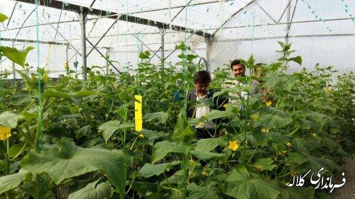 بازدید فرماندار کلاله از گلخانه دریافت کننده تسهیلات روستایی