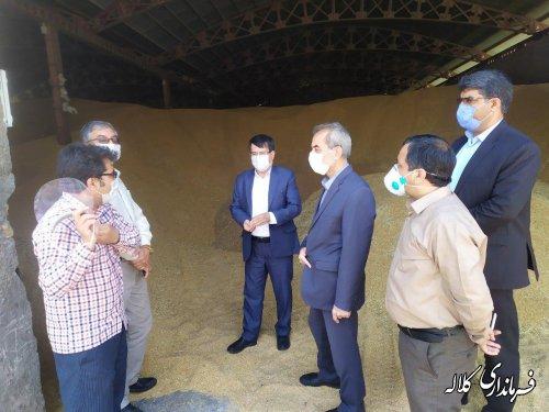بیش از ۸۰ هزار تن گندم از کشاورزان کلاله خریداری شده است