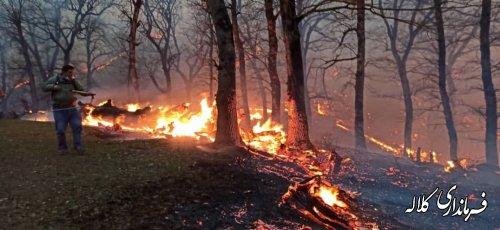 آتش در جنگل  چیشت خوجه لر بخش پیشکمر مهار شد