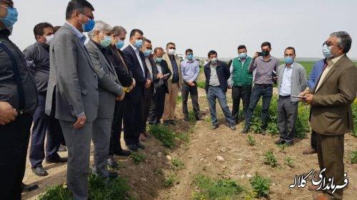 بازدید معاون وزیر جهاد کشاورزی از مزارع کلاله