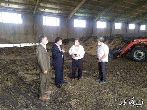 تاکنون ۶۷۰۰ تن دانه روغنی کلزا توسط مراکز خرید کلاله خریداری شده است