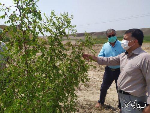 بازدید فرماندار کلاله از طرح تبدیل اراضی شیبدار به باغات مثمر